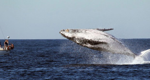 3-Hour Blue Whale Boat Tour
